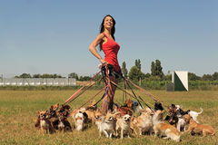 Girl and chihuahuas Royalty Free Stock Photos