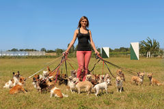 Girl and chihuahuas Stock Image