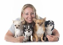 Girl and chihuahuas Stock Photos