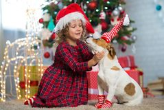 Girl child celebrates Christmas with dog Jack Russell Terrier at stock photos