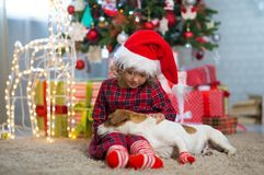 Girl child celebrates Christmas with dog Jack Russell Terrier at stock photo
