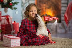 Girl child celebrates Christmas with dog Jack Russell Terrier at royalty free stock images