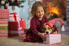 Girl child celebrates Christmas with dog Jack Russell Terrier at royalty free stock photos