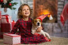 Girl child celebrates Christmas with dog Jack Russell Terrier at. Little girl child celebrates Christmas with dog Jack Russell Terrier at home under the stock photos