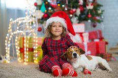 Girl child celebrates Christmas with dog Jack Russell Terrier at royalty free stock image
