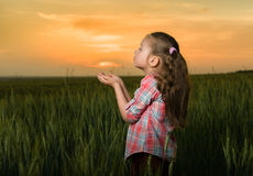 Girl child portrait in the field at sunset Royalty Free Stock Images
