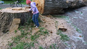 Girl child walks around a huge cut tree. The tree is very large. The diameter of the tree more than girl. The child is very interesting to see such a huge tree stock video footage