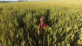 Girl child walks on the wheat field. Wheat born a tall and thick. Beautiful ears of wheat. Summer sunny evening stock video