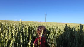 Girl child walks on the wheat field. Wheat born a tall and thick. Beautiful ears of wheat. Summer sunny evening stock video footage