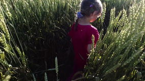 Girl child walks on the wheat field. Wheat born a tall and thick. Beautiful ears of wheat. Summer sunny evening stock footage