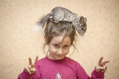 A girl and a chinchilla. Stock Photography