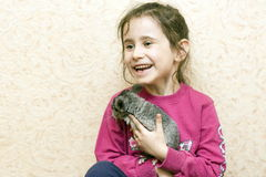 A girl and a chinchilla. Stock Photos