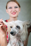Girl and chinese crested dog. The beautiful girl and chinese crested dog on grey background. Shallow DOF, focus on dog stock images