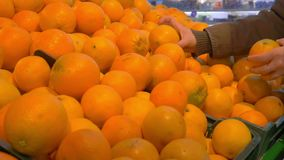 Girl chooses fresh oranges in the store stock video