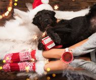 Girl in Christmas socks with her dog. Girl in Christmas socks enjoying a winter time with her dog and cup of hot tea royalty free stock images
