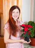 Girl with Christmas Star flowers Royalty Free Stock Images