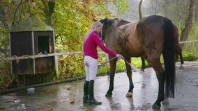 Girl Cleaing Horse stock video