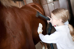 Girl cleaning horse Stock Image
