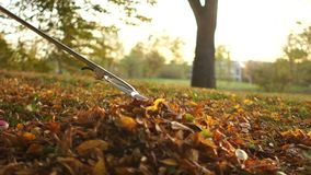 Girl cleans the autumn leaves in the yard with a rake. Beginning of autumn, raking leaves stock footage