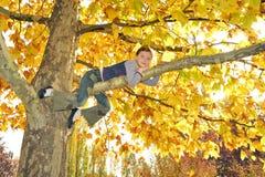Girl climbed on tree Royalty Free Stock Photos