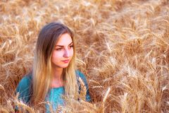 Young girl is in the field wheat, in ripe ears. Royalty Free Stock Images