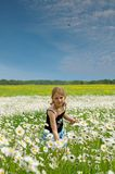 A Girl on the Cloverleaf Field. The girl in the field with camomiles against the dark blue sky соблаками and a flying bird Royalty Free Stock Images