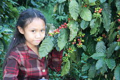 Girl in coffee plantations Royalty Free Stock Images