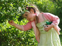 The girl collecting berries Royalty Free Stock Photo