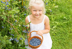 Girl collecting blueberries Royalty Free Stock Image