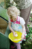 Girl collecting eggs. stock image