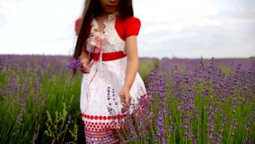 Girl Collecting Flowers in a Lavender Field stock video