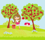 Girl collects apples in sunny day Stock Images