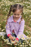 Girl collects chamomile. A girl collects bouquet chamomile Royalty Free Stock Images