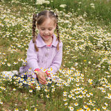 Girl collects chamomile. A girl collects bouquet chamomile Royalty Free Stock Photos