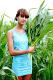 A girl collects corn. Field Royalty Free Stock Images