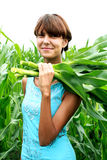 A girl collects corn. Field Stock Images