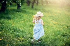 Girl collects dandelions bouquet for a wreath in meadow of orhard stock image
