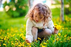 The girl collects dandelions in the clearing. stock images