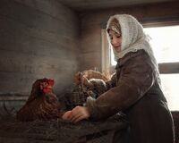 A girl collects eggs in a chicken coop