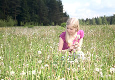 Girl collects in the field dandelions Stock Photo