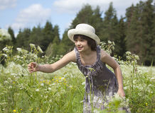 A girl collects flowers. In the meadow Royalty Free Stock Photo