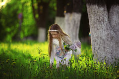 Girl collects flowers Royalty Free Stock Images