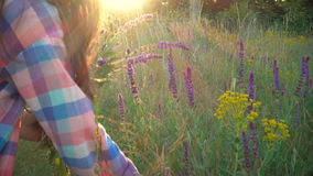 Girl collects flowers of salvia at the sunset time stock video footage