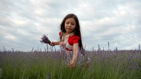 Girl Collects Lavender stock video footage