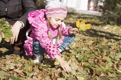 Girl collects leaves Royalty Free Stock Photo