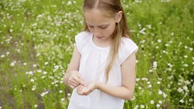 Girl Collects Petals Daisies Glade Outdoor Nature. Attractive Caucasian Female Child Pick up Flowers Chamomile Lawn. Blond Long Hair Kid Relax Blossom Scenery stock video