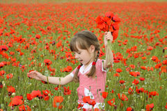 A girl collects poppy flowers.  Stock Photos