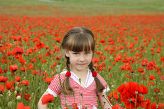 A girl collects poppy flowers.  Royalty Free Stock Photography