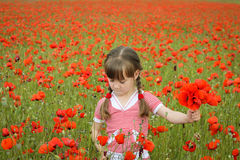 A girl collects poppy flowers.  Royalty Free Stock Images