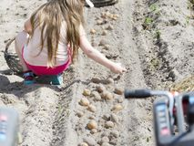 Girl collects potatoes from the field Stock Image